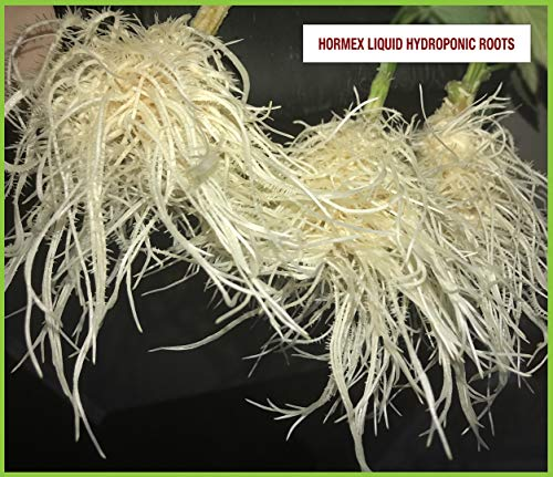 Hormex Vitamin B1 Rooting Hormone Concentrate | Prevents Transplant Shock | Accelerates Growth | Stimulates Roots | For All Plant Varieties and Grow Mediums Including Hydroponics (8 oz)