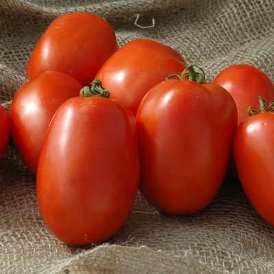 Tomato Pony Express F1 - Untreated Vegetable Seeds - 100 Seeds