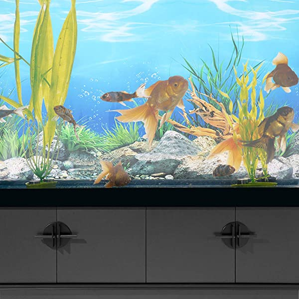 Aquarium-Background