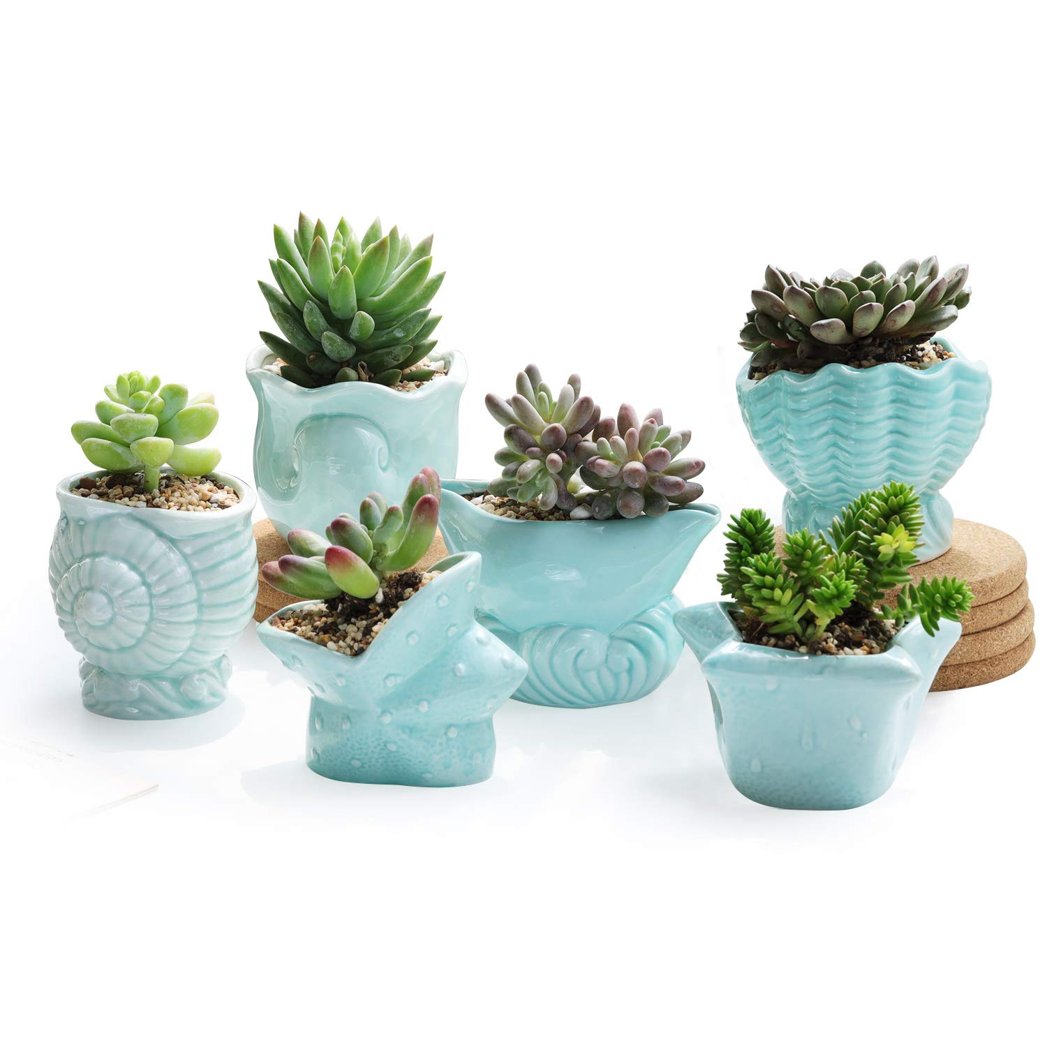 T4u 3 Inch Small Succulent Pot With Drainage Teal Seashell Ceramic Succulent Planter Set Of 6