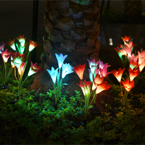 Flower at night