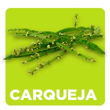 carqueja