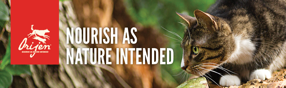 Orijen Cat Food Banner