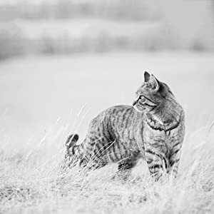 A healthy cat peering back